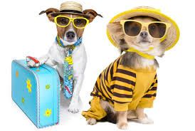 Dogs Ready for Vacation